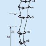 venoflex-micro-knee-high-ccl2